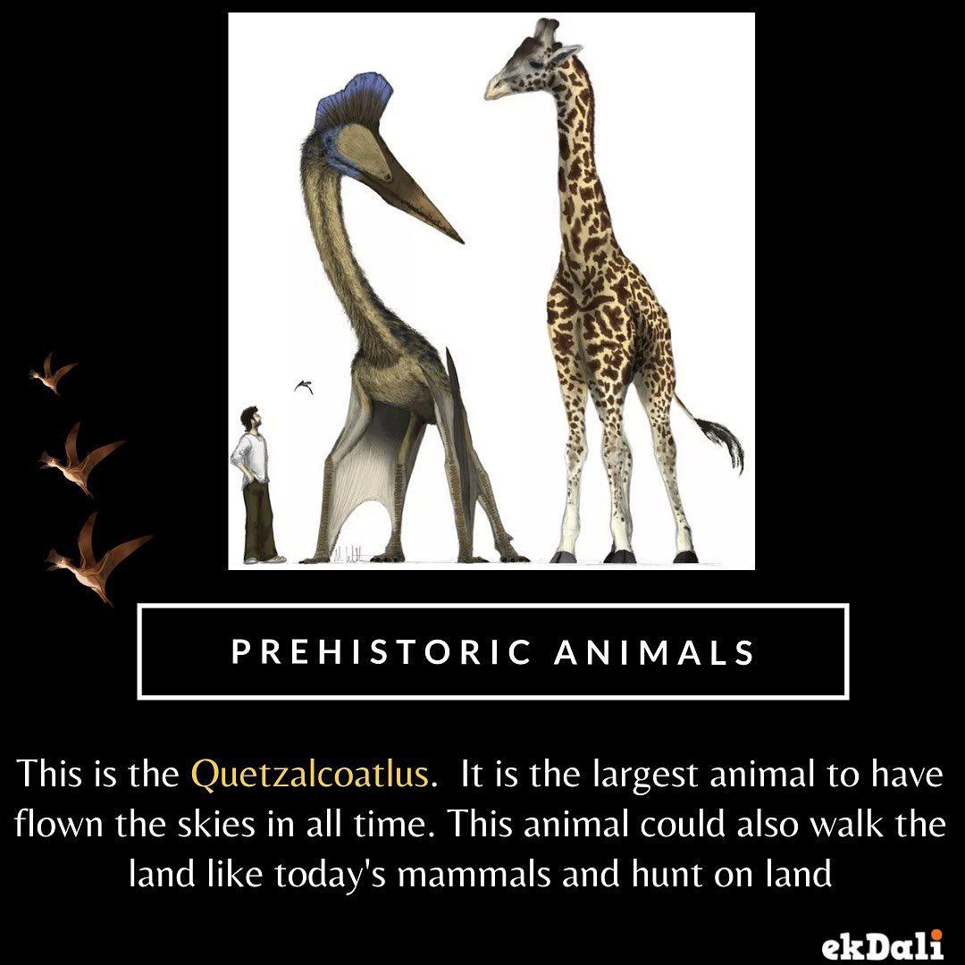 Prehistoric Animals - Quetzalcoatlus