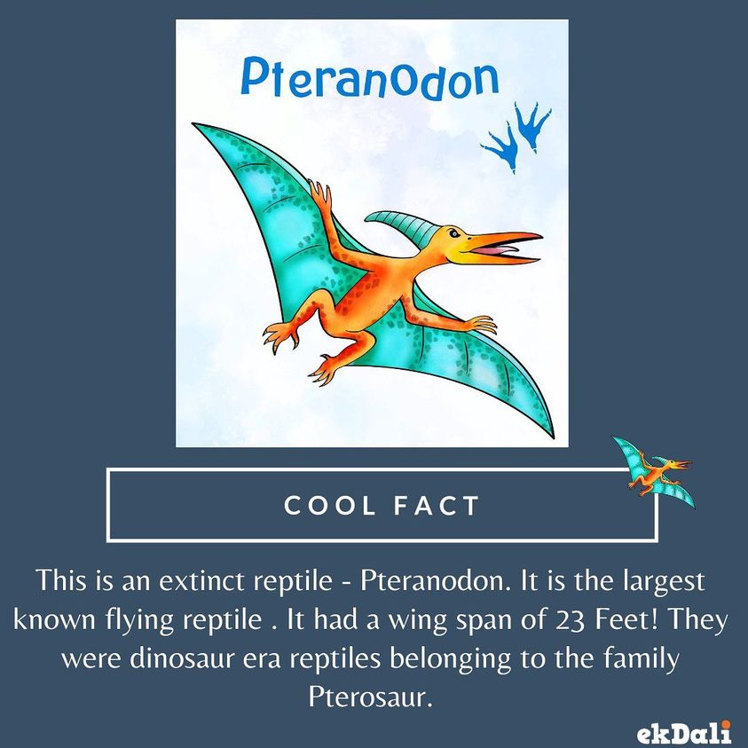 Pteranodon the largest winged Reptile