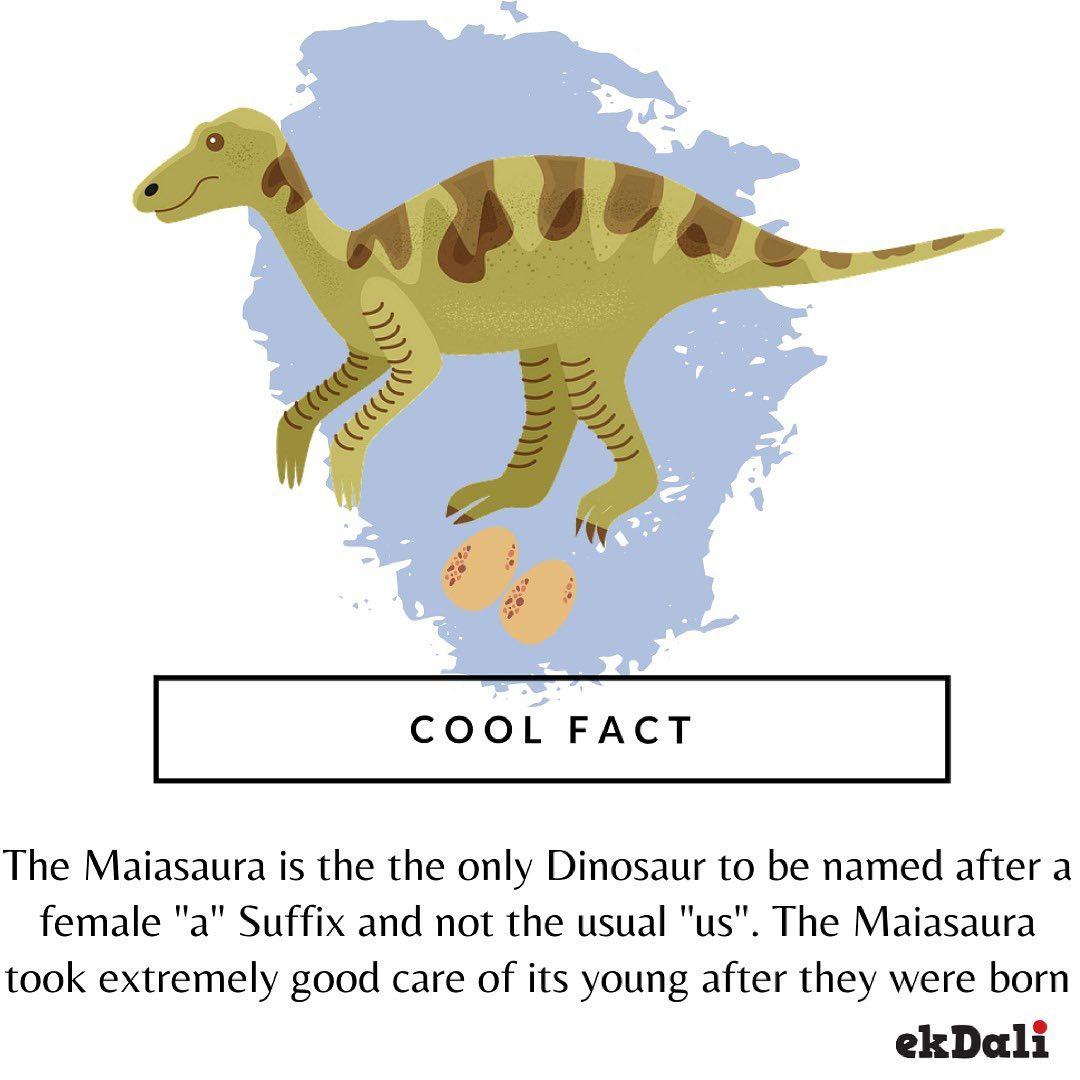 Cool Fact - Maiasaura