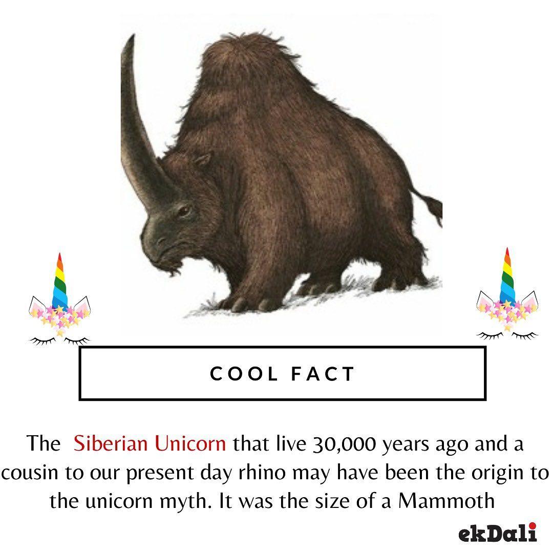 Cool Fact - The Siberian Unicorn