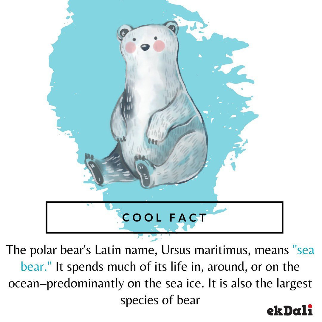 Cool Fact - Polar Bear is the sister species of the regular brown bear