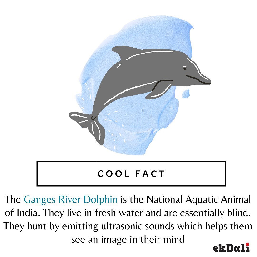 Animals of India - Ganges Dolphins