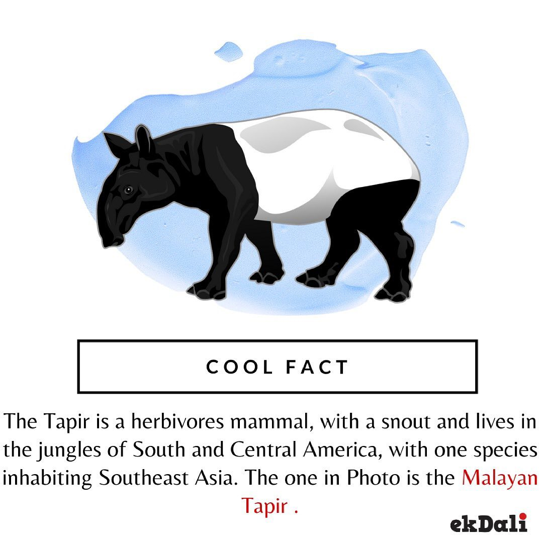 Cool Fact - Mayan Tapir
